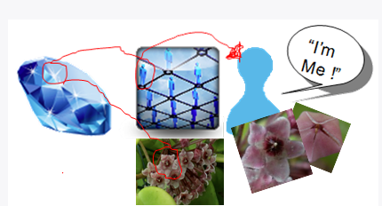Diagram illustrating how a diamond of ONENESS is transformed to a grid of interconnected collective unconscious minds. It is then paralleled with the Hoya Carnosa flower